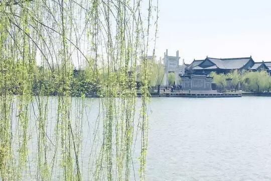 壁纸 垂柳 风景 柳树 摄影 树 桌面 540_360