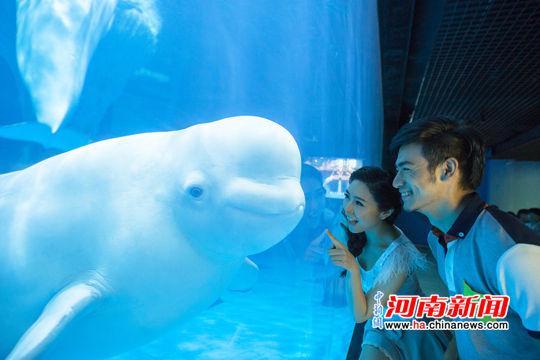 壁纸 海底 海底世界 海洋馆 水族馆 540_360